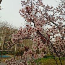 永大明珠东山花园三区